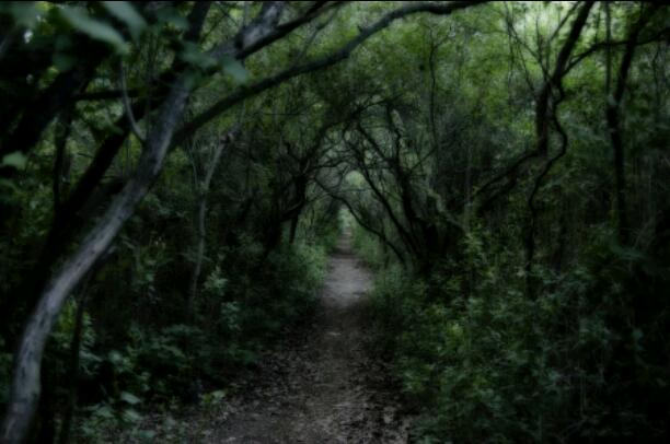The Forest That Moans