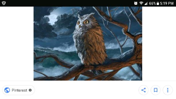 Owls (chapter 1)
