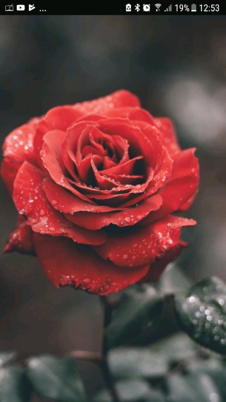 A funerul poem 😭💔