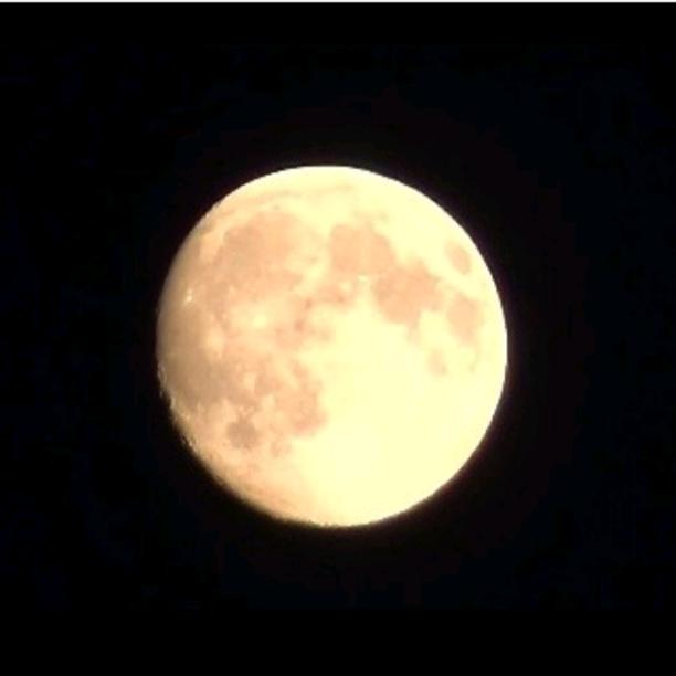 Shady Moon