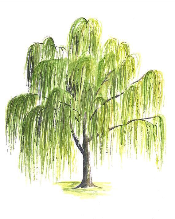 Poem 1--- Willow tree