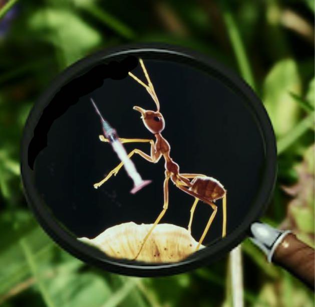 A Bug in Rehab