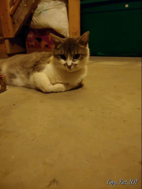 sooo.....meet my cat mabel!