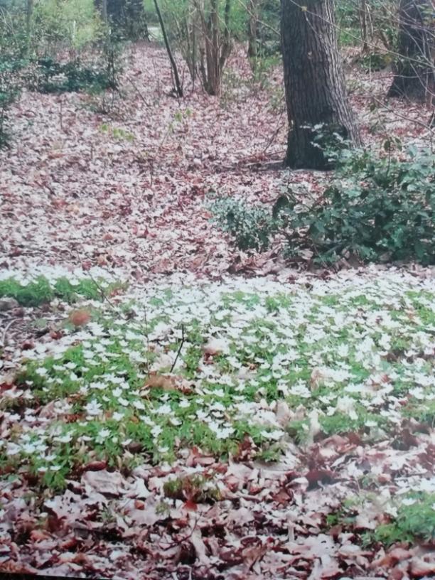 White flower carpet