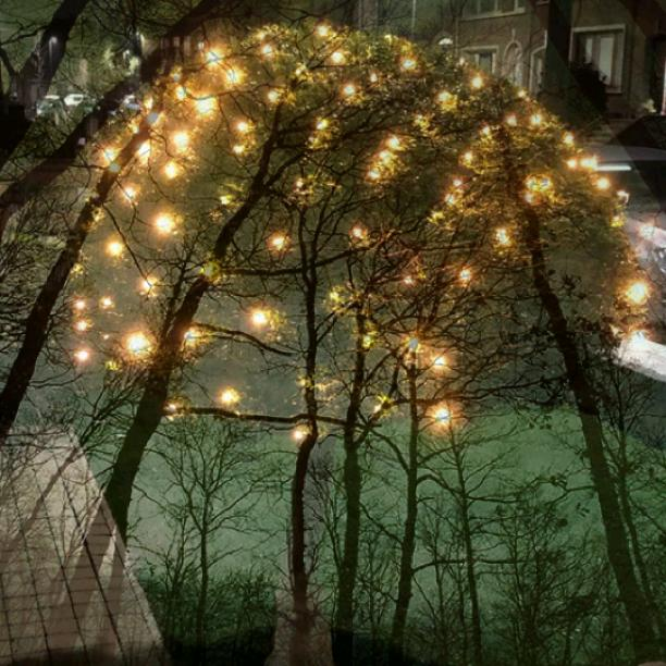The Light trees