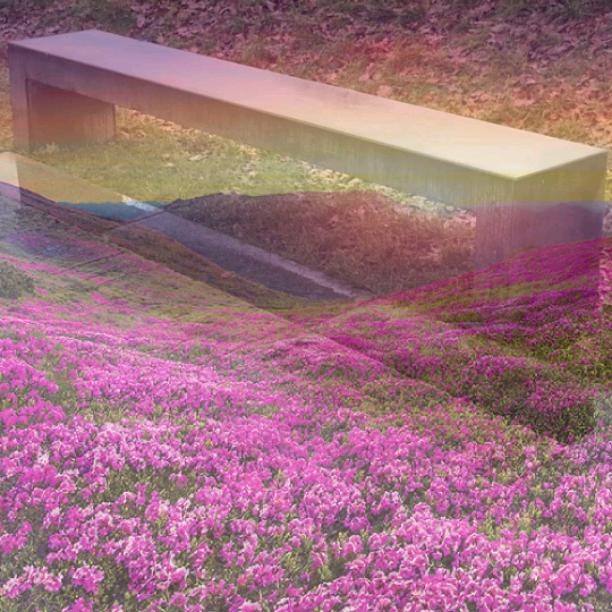 Bench in a flower field