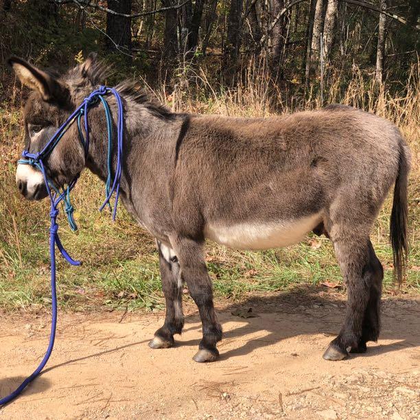The Mischievous Donkey