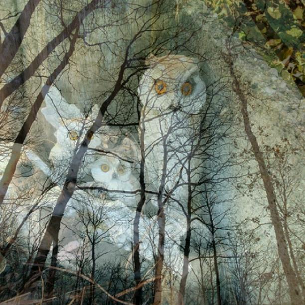 An owl nest