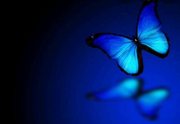 A BLUE BUTTERFLY.......