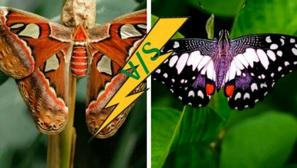 BUTTERFLY AND MOTH...