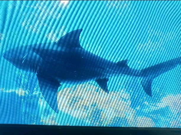 The big shark